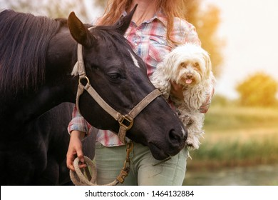 portrait of young woman with her horse and her little dog