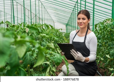 Portrait of a young woman at work in greenhouse,in uniform and clipboard in her hand . Greenhouse produce. Food production. Tomato growing in greenhouse.