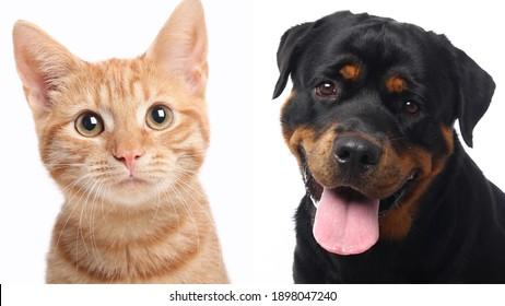 Porträts von hübschen Haustieren
