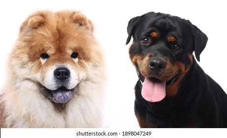 Portraits of beautiful lovely pets