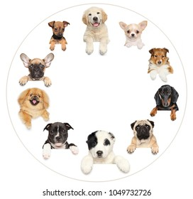 Portraits of dog puppies positioned in a circle