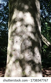 Portraiture orientation photo of trunk of a tree with names in English  crafted on it