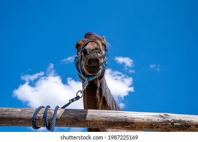 portret of a horse on a farm with blue sky in the background - Shutterstock ID 1987225169