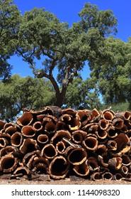 Portugal, Alentejo region. Cork oak bark drying in the sunshine (unprocessed cork) Cork oaks in background - Quercus Suber.