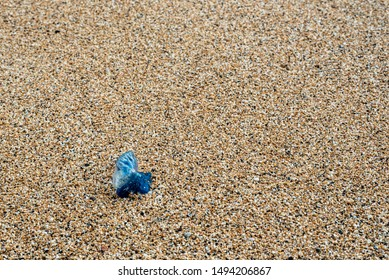 Portugese man-o-war washed up on shore