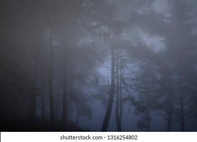 Portuguese autumn misty pines at dusk or night