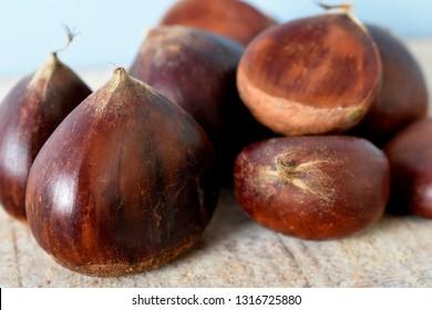 The Portuguese chestnut