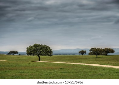 Portuguese landscape in Alentejo region with green grass plains and sparse trees