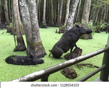 Posing Pigs in a swamp
