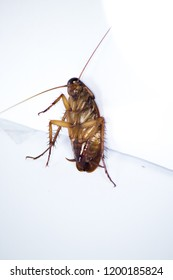 The position of cockroaches