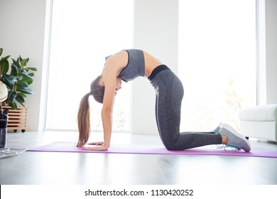 Position sexy build muscle practice house bodycare concept. Full length size photo of focused pretty beautiful with ponytail hair lady standing in cat position on purple mat in white spacious room