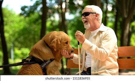 Positive blind man feeding guide dog, sitting in park, nutritious canine food