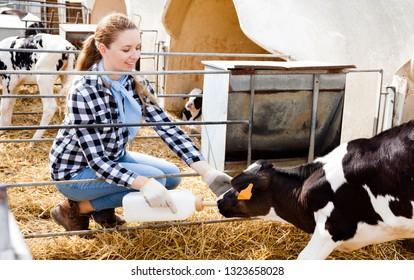 Positive female farm worker feeding calves in stall