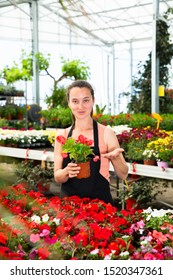 Positive female florist in apron working with begonia plants in hothouse indoors