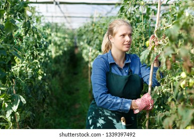 Positive female horticulturist  in gloves standing near tomatoes seedlings in  hothouse