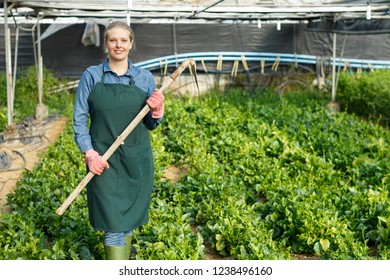 Positive female horticulturist  with  mattock working with creeping spinach in  hothouse