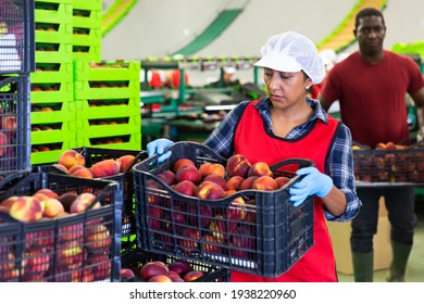 Positive latino employee stacking boxes with sorted peaches on fruits sorting department