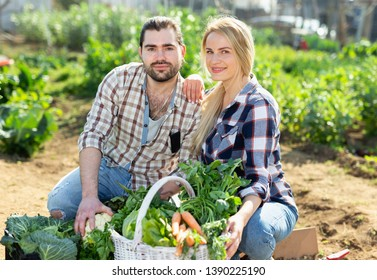 Positive man and woman demonstrating harvest of cabbage, onion and greens at garden