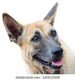 Positive and optimistic dog .Isolated