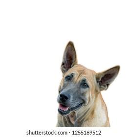 Positive and optimistic dog.Isolated