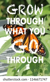 a positive quote on a Monarch (Wanderer) Butterfly and green background