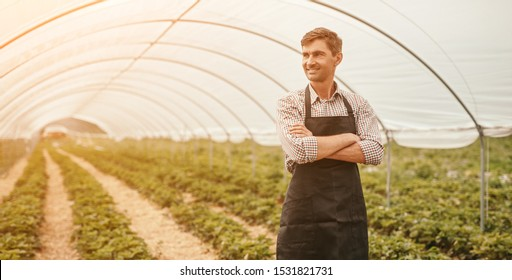 Positive small business owner with crossed arms smiling and looking away while standing near rows of strawberry plants in huge hothouse
