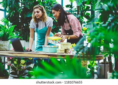 Positive successful female florists searching addresses of clients via application on modern laptop computer for making box presents during working time at own botanic conservatory with plants