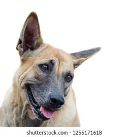 Positive and  sympathetic dog.Isolated