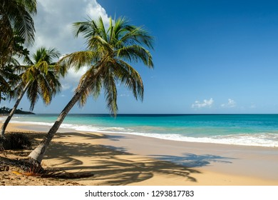 """Postal card from idyllic beach of """"la Perle"""" in Guadeloupe, France"""