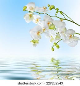 Postcard. Beautiful white orchid flowers reflected in water on blue background