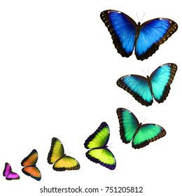 A postcard with colorful butterflies isolated on white background. The butterflies fly one by one in a curve, look like fluttering in, zoom in and change color. Copy space for text.