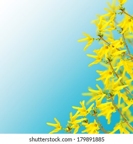 Postcard with fresh flowers forsythia and place for your text. Abstract background for design.
