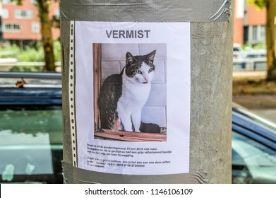 Poster Of A Lost Cat At Amsterdam The Netherlands 2018