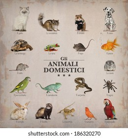 poster of pets in italian