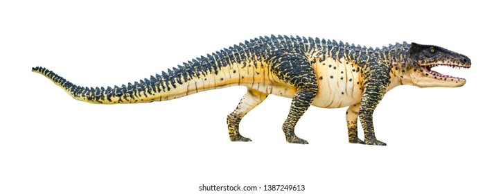 Postosuchus is a carnivorous genus of Rauisuchid, Postosuchus is the prototype of a crocodile and lived in during the Triassic, isolated on white background with clipping path