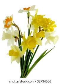 posy of daffodils