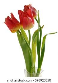 posy of red tulip closeup