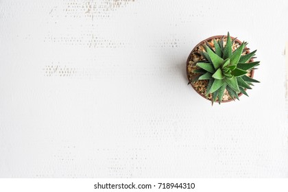 Pot cactus on white background Texture