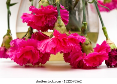 pot of faded carnations on white background