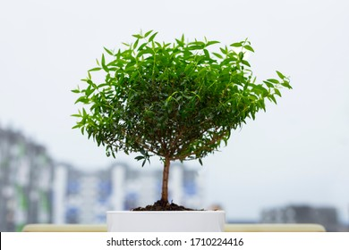 pot with flowers mini tree