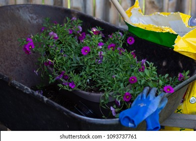 pot of flowers sits in wheelbarrow with potting soil and gloves laying next to it