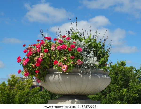 Pot of flowers under a blue sky.