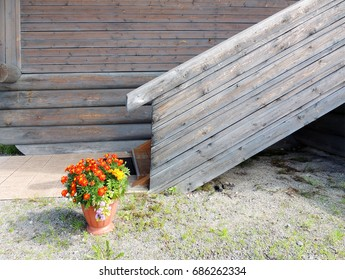 Pot with marigolds (Tagetes) at porch of  wooden house