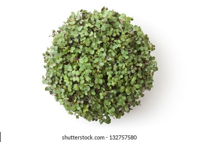 Pot with newborn sprouts of radish. Top view. Isolated on white.
