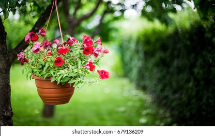 Pot of petunia flowers hanging on tree