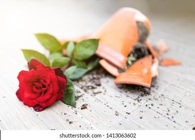 Pot with pink broken on the floor