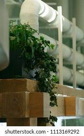 Pot with plant on the floor above. Next to it there are white pipes, it looks like a technical room in the office.