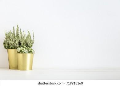 Pot Plants in golden pots on a shelf.