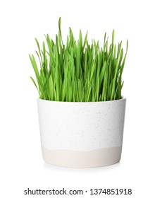 Pot with sprouted wheat grass isolated on white