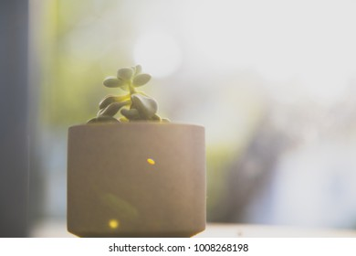 pot of succulent with a glittering background